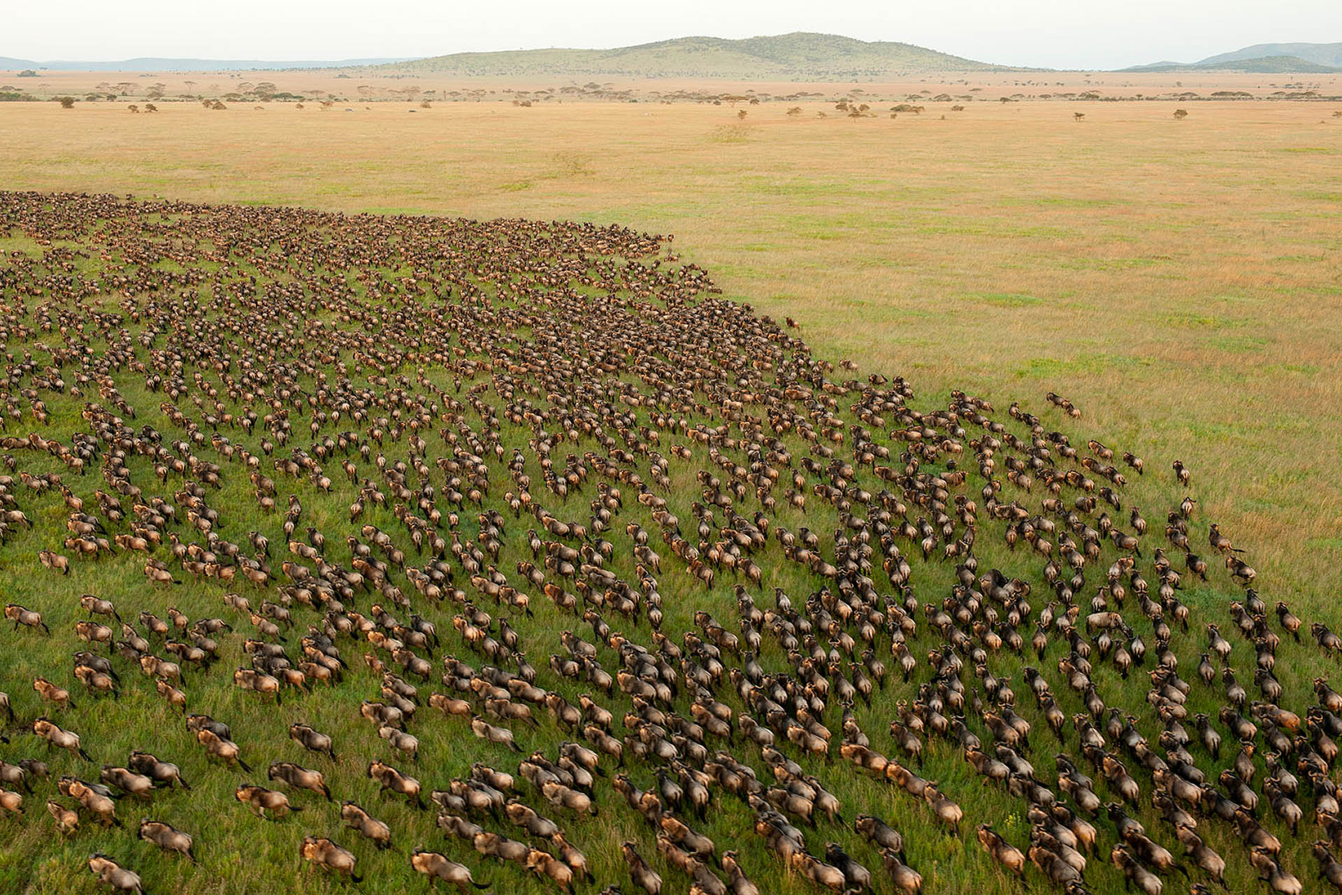 contact-maasai-wanderings-safari-itineraries-signature-photo-safaris-africa-wildebeest