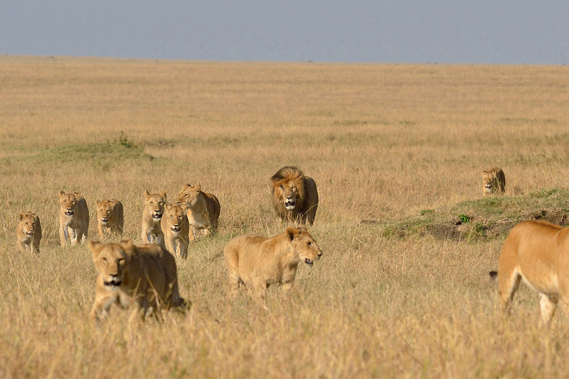 faqs-maasai-wanderings-safari-itineraries-signature-photo-safaris-africa-lions