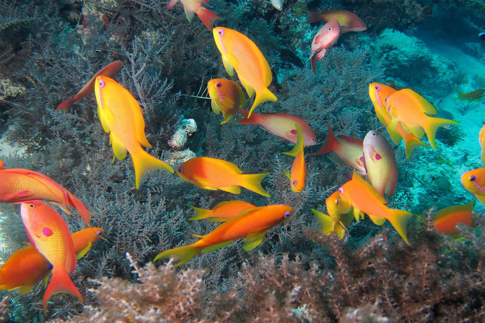 gallery-maasai-wanderings-safari-itineraries-signature-photo-safaris-africa-fish