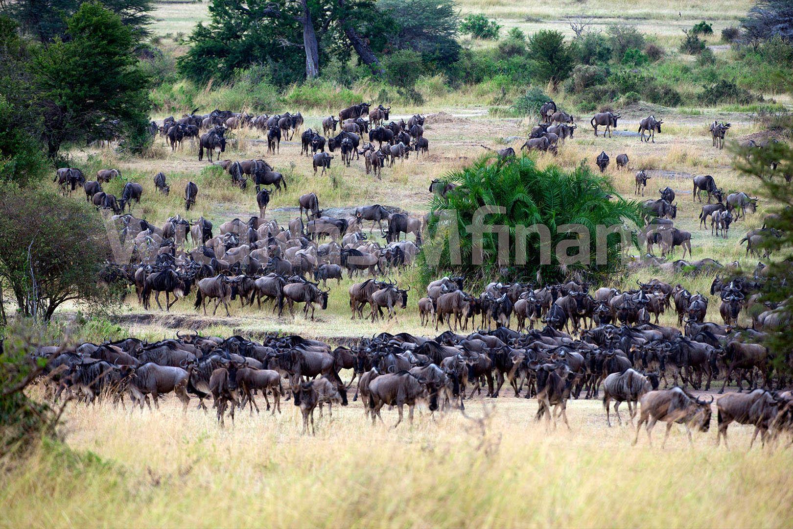gallery-maasai-wanderings-safari-itineraries-signature-photo-safaris-africa-migration