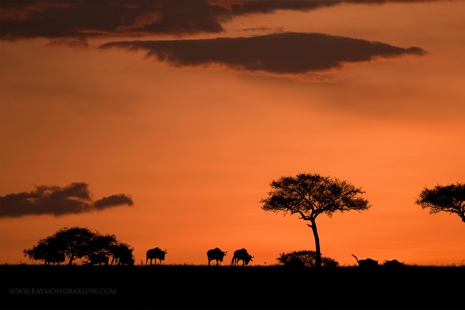 gallery-maasai-wanderings-safari-itineraries-signature-photo-safaris-africa-wildlife-sunset-trees