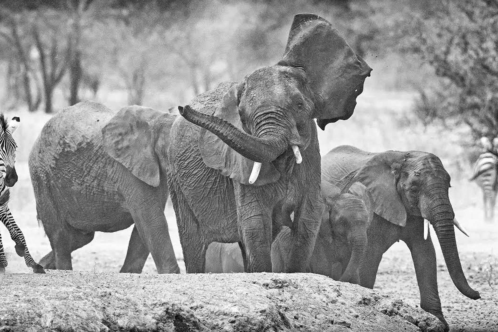 m-m-photo-tours-inc-photography-signature-photo-safaris-maasai-wanderings-africa-wildlife-elephants