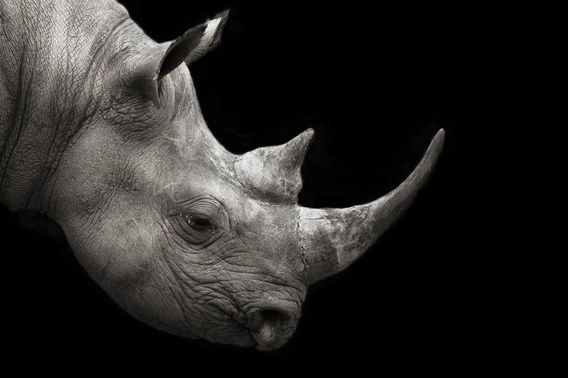 mario-moreno-photography-signature-photo-safaris-maasai-wanderings