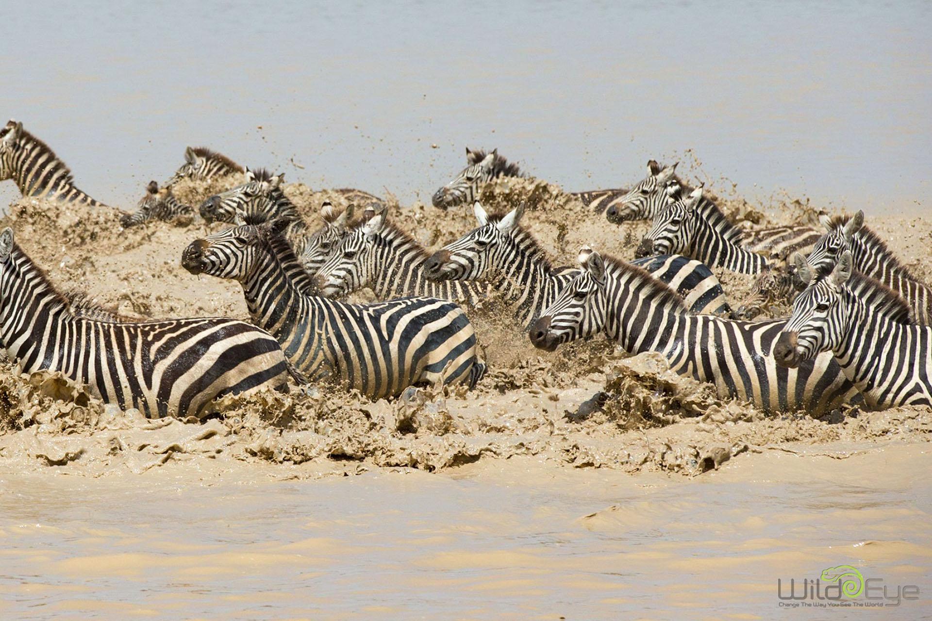 marlon-du-toit-photography-signature-photo-safaris-maasai-wanderings-africa-wildlife-zebra