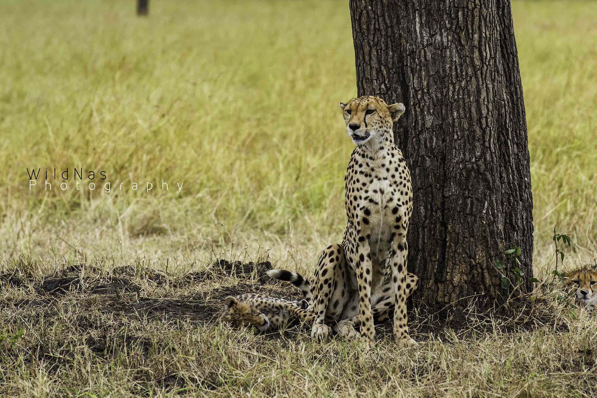 paul-kirui-photography-signature-photo-safaris-maasai-wanderings-africa-wildlife