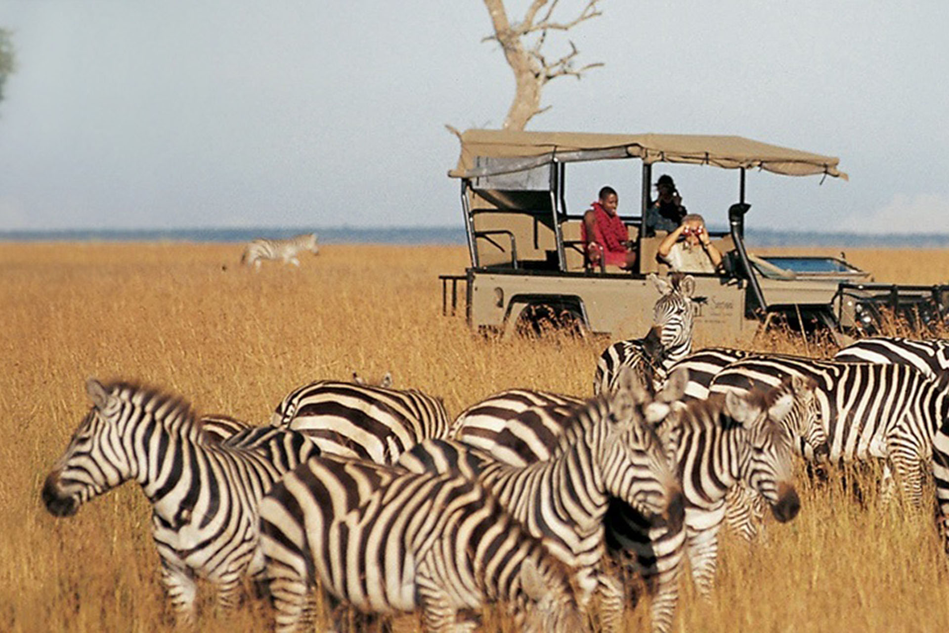 safari-itineraries-maasai-wanderings-safari-itineraries-signature-photo-safaris-africa-zebra