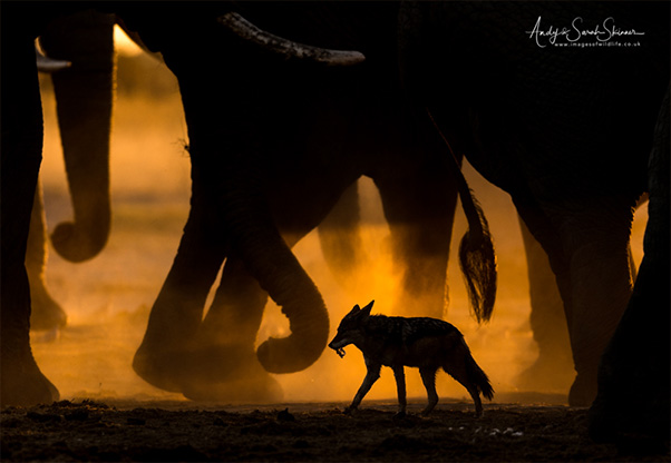 signature-photo-safaris-andy-sarah-skinner-wildlife-photography-maasai-wanderings-africa-Wild-Dog