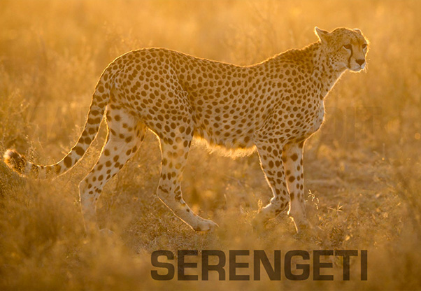 signature-photo-safaris-fmarlon-du-toit-photography-maasai-wanderings-africa