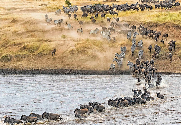 signature-photo-safaris-m-m-photo-tours-inc-maasai-wanderings-africa