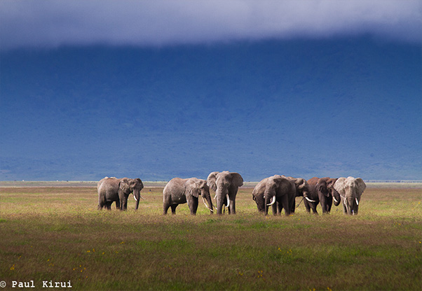 signature-photo-safaris-paul-kirui-photography-maasai-wanderings-africa