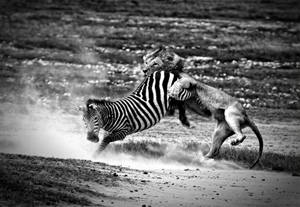 signature-photo-safaris-tom-whetten-photography-maasai-wanderings-africa