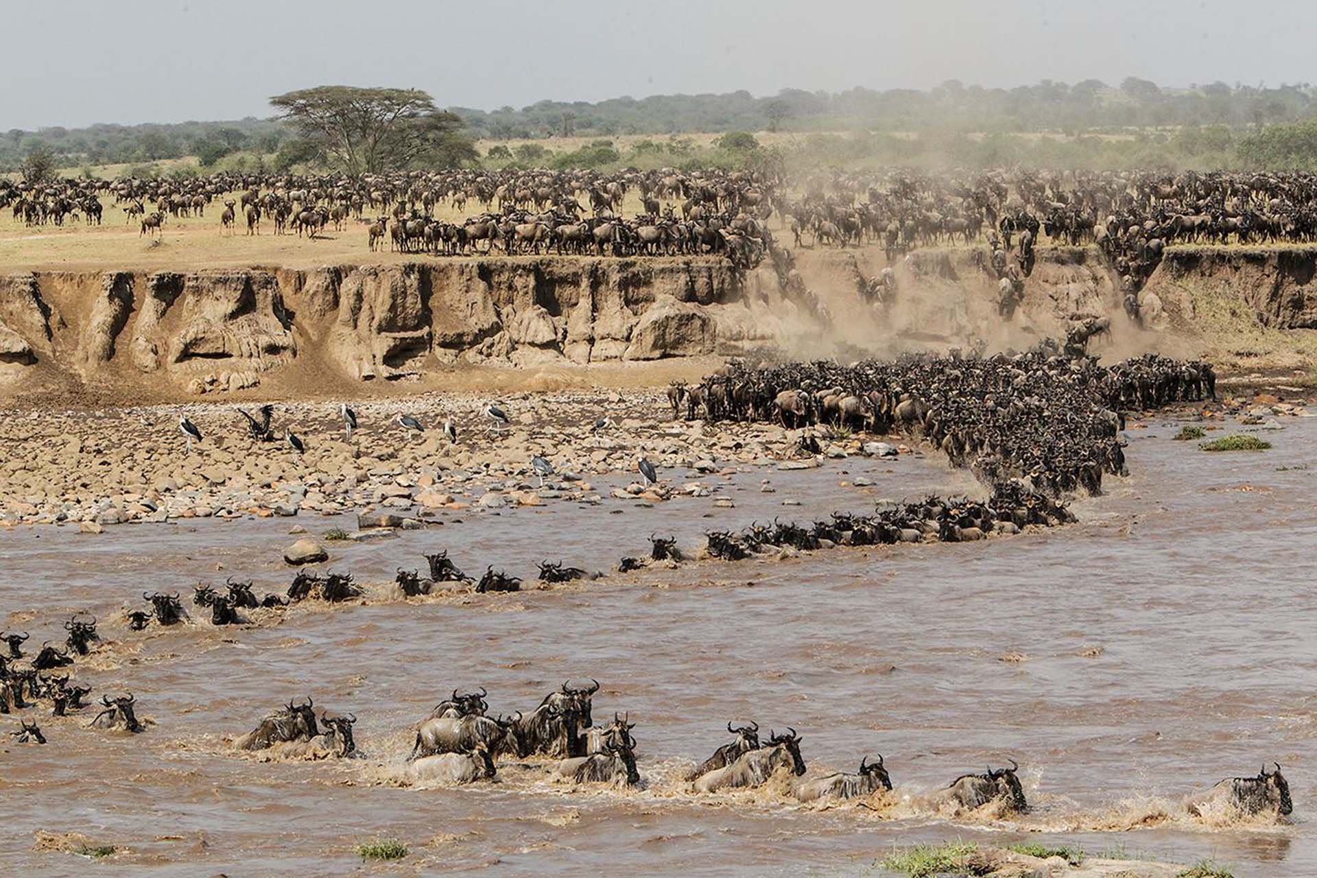 tom-whetten-photography-signature-photo-safaris-maasai-wanderings-africa-wildebeest-wildlife